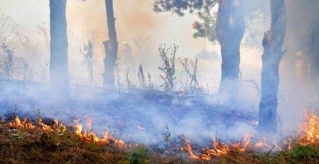 Овладян е пожар между селата Горно Дряново и Ковачевица