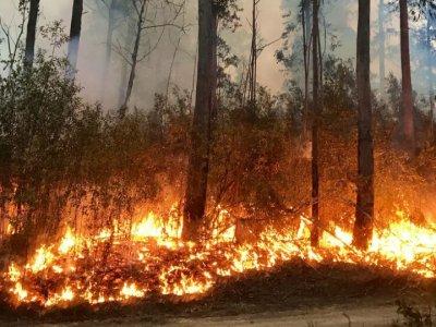 Изгоря три декара борова гора